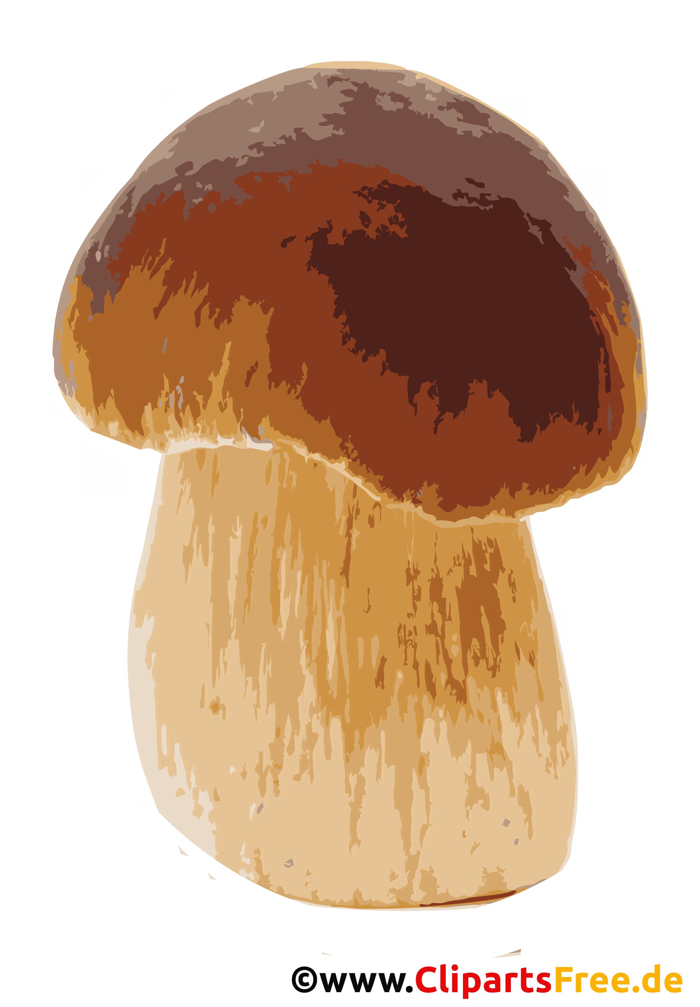 Kiefern- oder Rothütige Steinpilz Bild, Clipart, Illustration