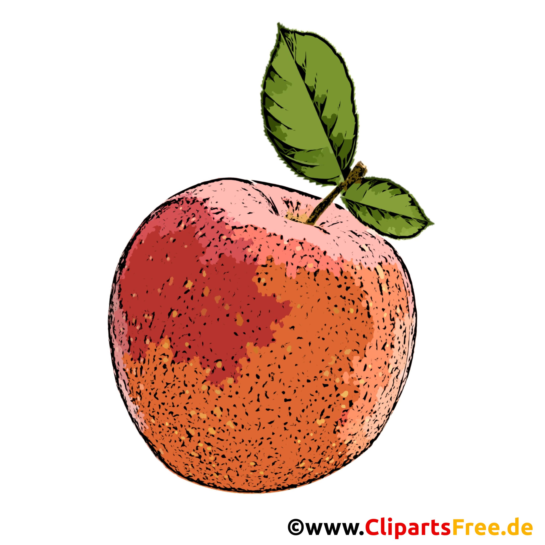 Pfirsich mit grünen Blättern Clipart, Bild, Cartoon