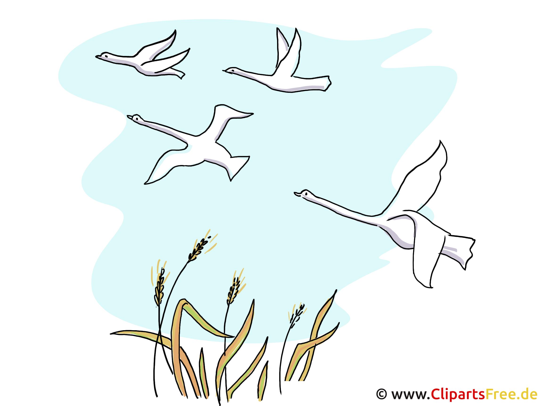 Vogelzug Bild, Clipart, Illustration