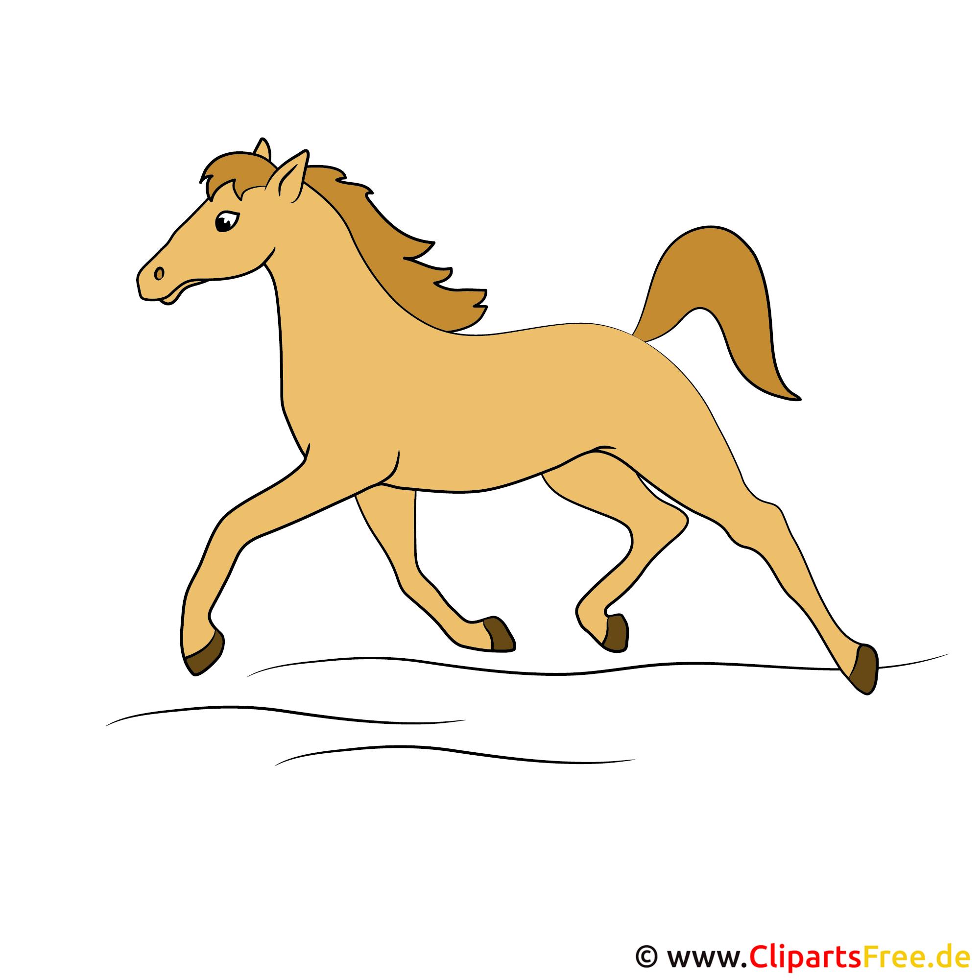 Laufendes Pferd GIF JPG