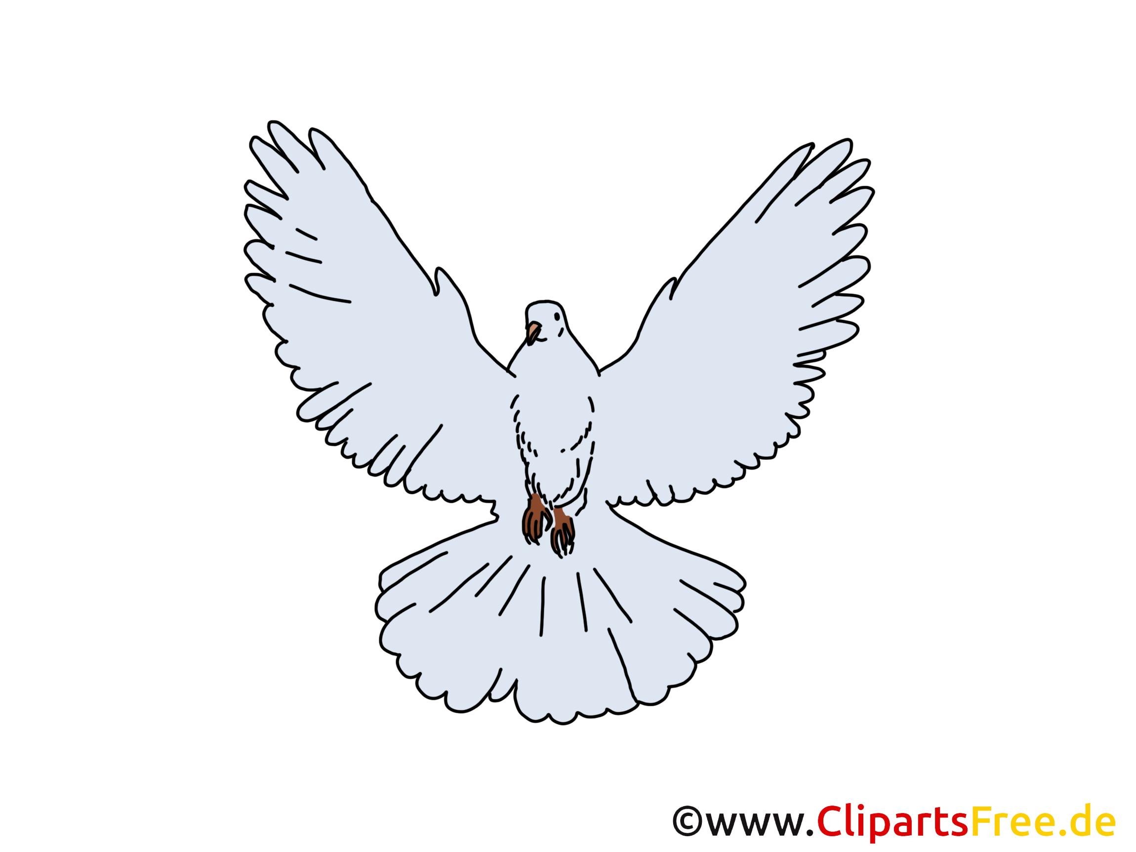 Bilder zu Pfingsten mit Taube kostenlos