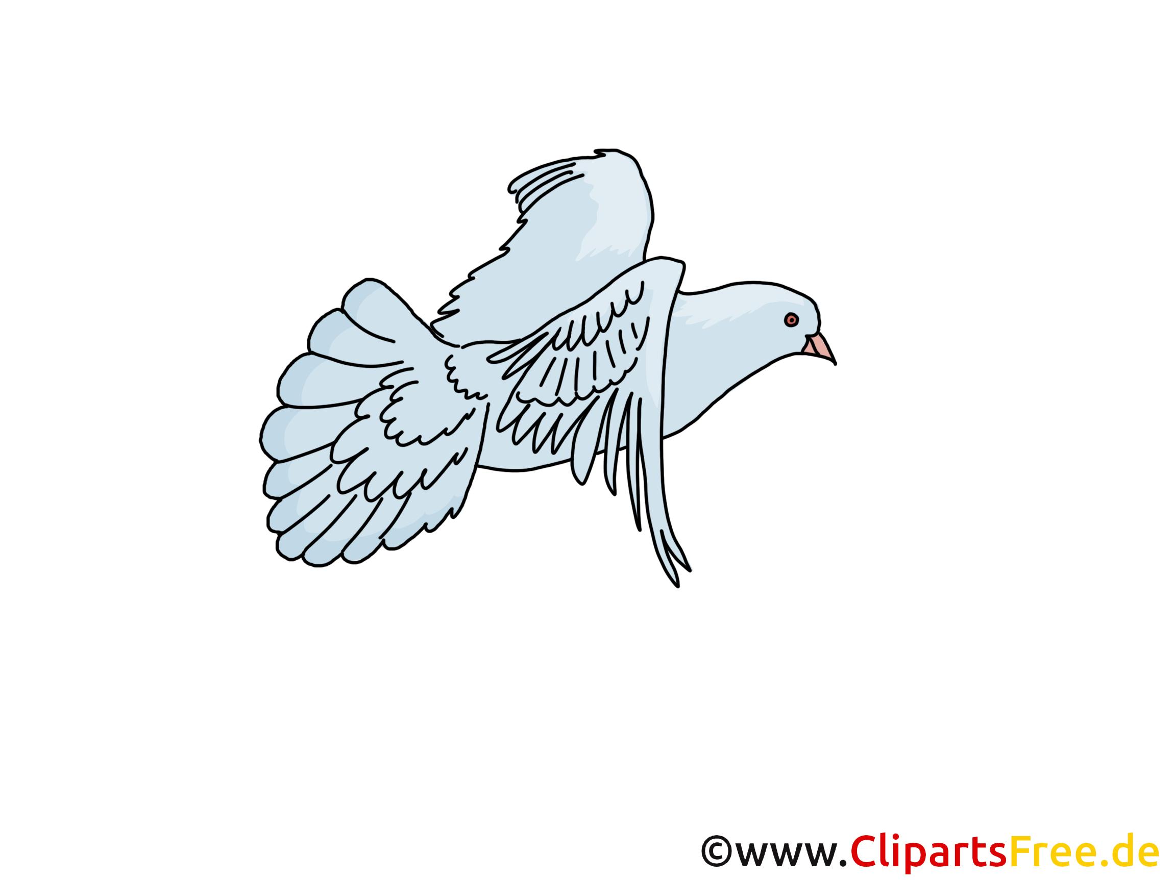 Taube Clipart