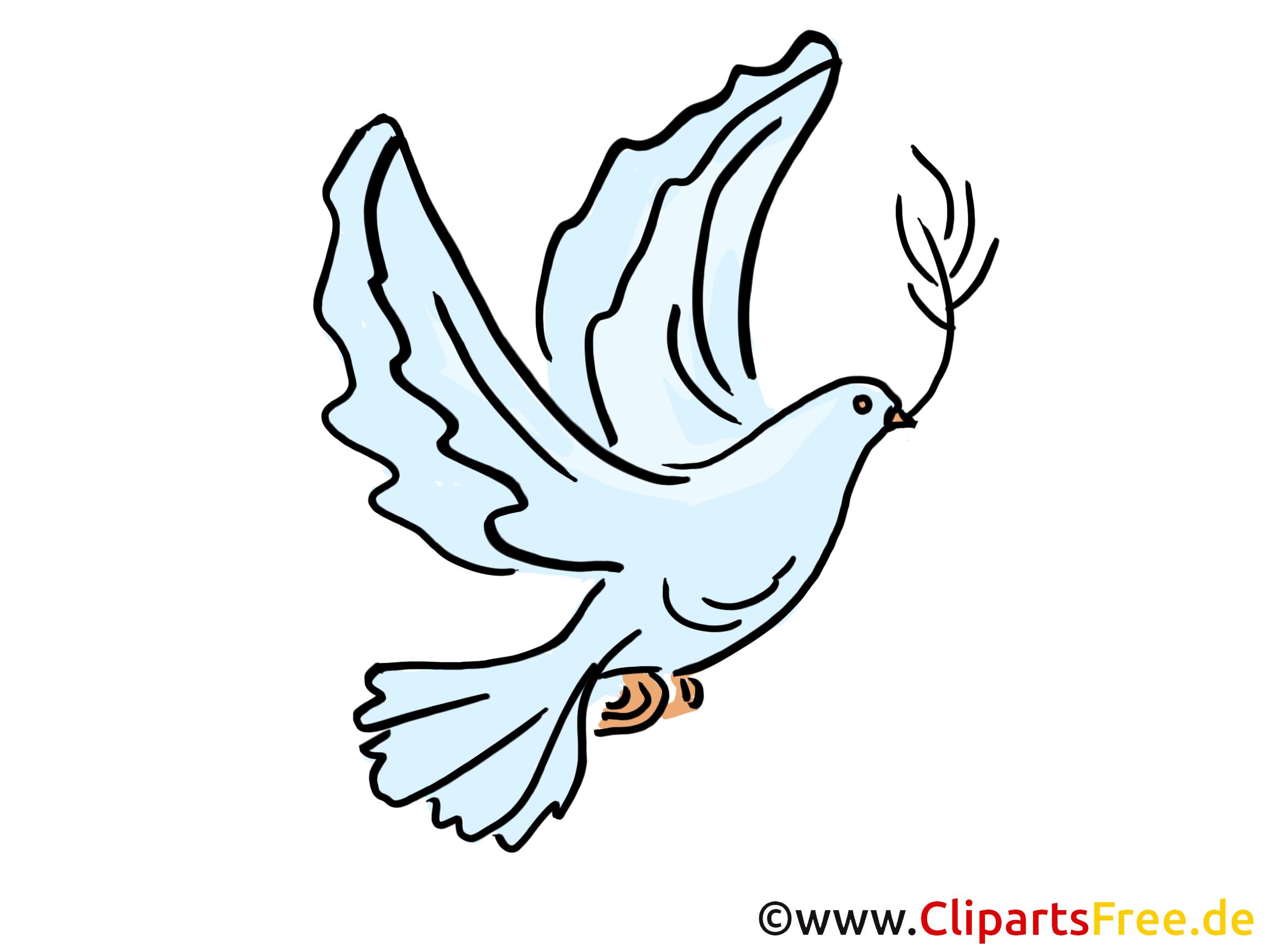 taube illustration