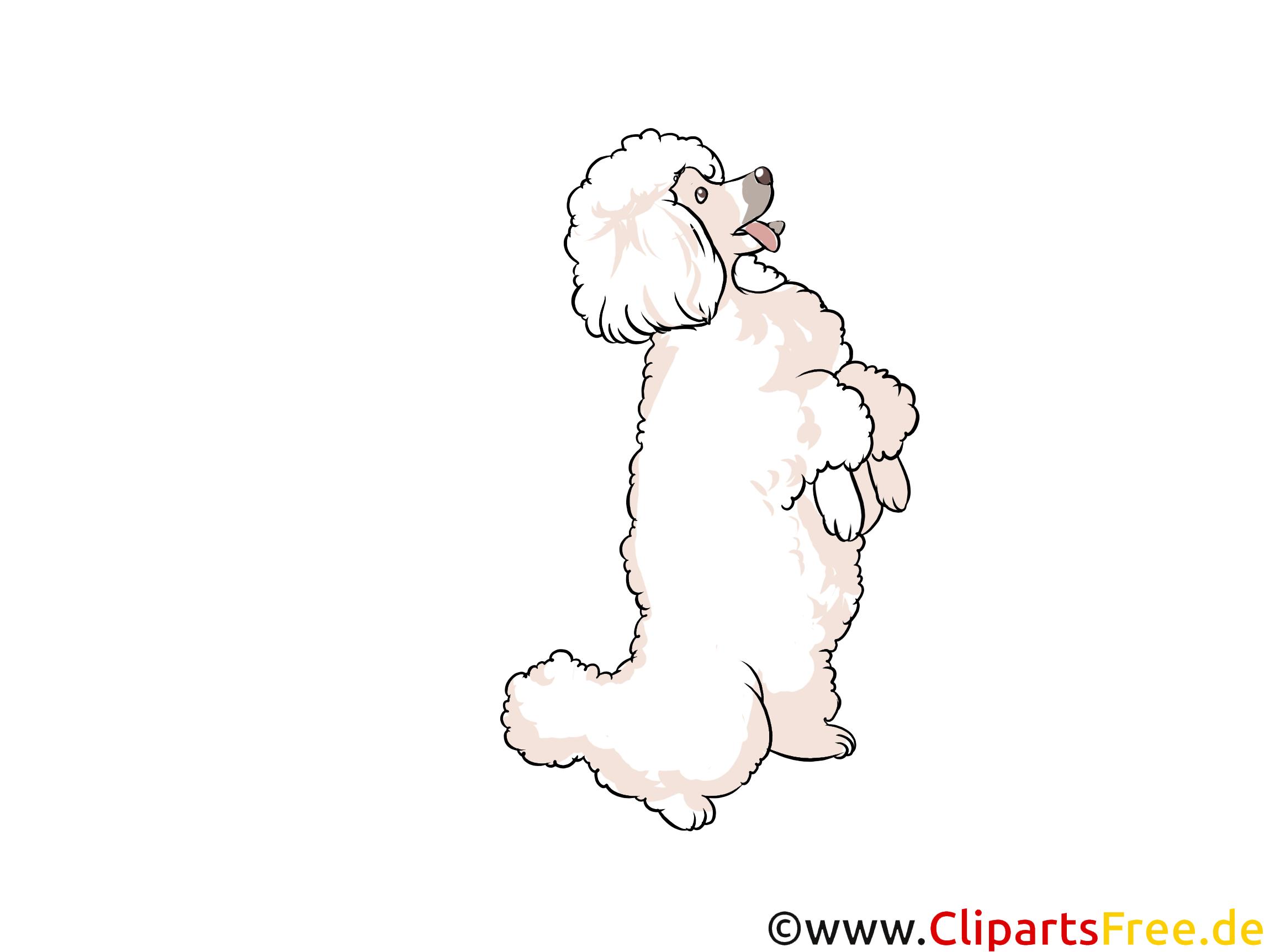 Pudel Clipart Hunderassen Bilder zum Drucken