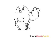 Kamel einfache Weitermal Druckvorlage