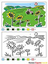 Sonnenblumen im Feld Ausmalen nach Zahlen