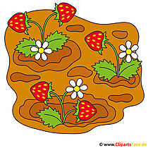 Erdbeeren Cartoon Clipart kostenlos
