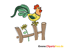 Kikeriki Bild, Clipart, Cartoon, Grafik