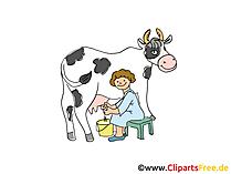 Kuh Melken Clipart Bilder Bauernhof