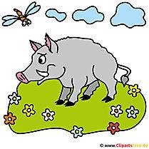Schwein Bild Clipart kostenlos