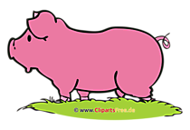 Schwein Clipart, Bild, Cartoon, Grafik, Illustration