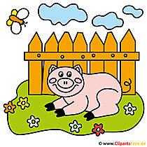 Schweinchen Cartoon Clipart - Bilder vom Bauernhof