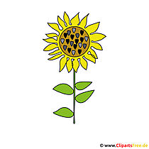 Sunflower picture clipart free
