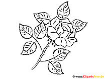 Clipart do kolorowania róży