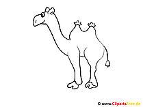 Kamele Bild Malvorlage zum Ausmalen