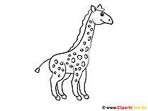 Szablon kolorowanki żyrafa