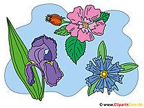 Resimler çiçek
