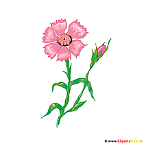 Blume Zyane Bild, Illustration, Karte