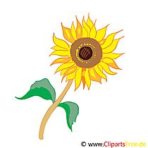 Clip Art sun flower bedava