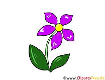 Clipart, Illustration, Bild Wiesen-Margerite