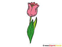 Clipart Tulpe