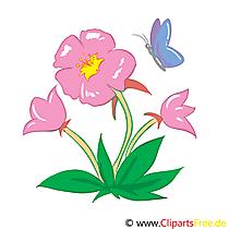 Eibisch Bild, Clip Art, Grafik, Illustration kostenlos