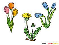 Kır Çiçekleri Görüntüleri - Clipart