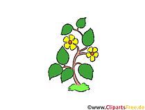 Kır çiçekleri clipart, illüstrasyon, resim ücretsiz