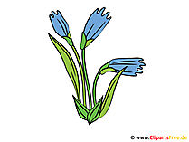 Flockenblume Bild - Clipart