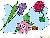 Çiçekler clipart