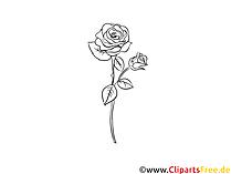 Grafica rosa bianco nero