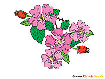 Rosehip Image - vector clipart