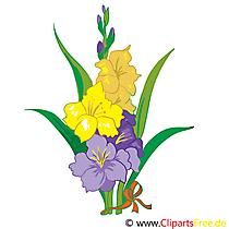 Hibiskus Bild, Clip Art, Grafik, Illustration kostenlos
