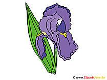 Iris görüntüsü - Clipart