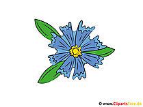 Peygamber Çiçeği resmi küçük resim
