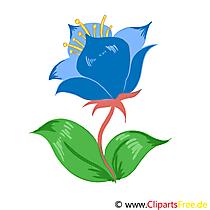 Peygamber Çiçeği resmi, küçük resim, grafik, illüstrasyon ücretsiz