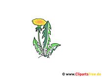 Karahindiba clipart