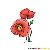 ケシのイメージ - 花のクリップアート無料