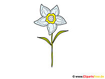 Daffodil Image-Clipart