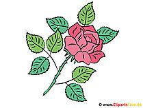 Róża Obraz - Clipart