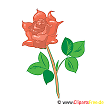 Rose Bild, Clip Art, Grafik, Illustration kostenlos