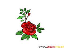 Immagine rosa, grafica, illustrazione gratis