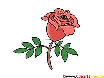 Clipart rosa