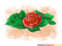 Rosa pittura clipart, foto, grafica gratis