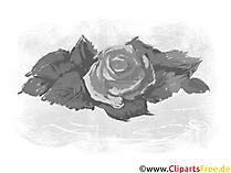 Grafica e clipart rose in bianco e nero