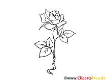 Rosa bianco nero clipart, grafica, immagine