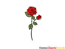 Clipart della rosa rossa, immagine, illustrazione, grafico