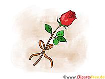Bella rosa rossa clipart, foto, illustrazione, grafica