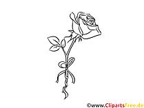 Disegno in bianco e nero rosa, immagine, clipart, grafica