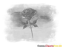 Foto in bianco e nero con rosa